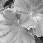 機能的な白色のランジェリー